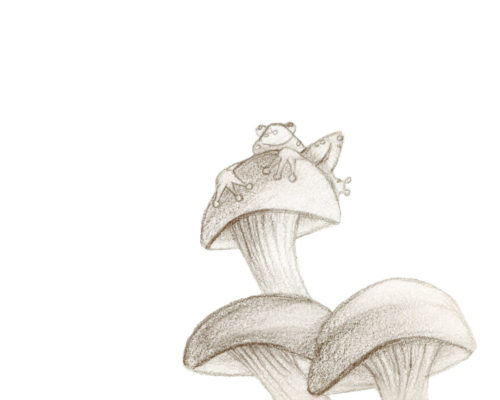 Frog and Mushroom Sketch